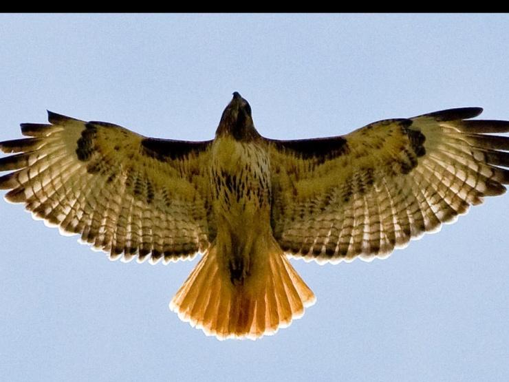 A hawks eye